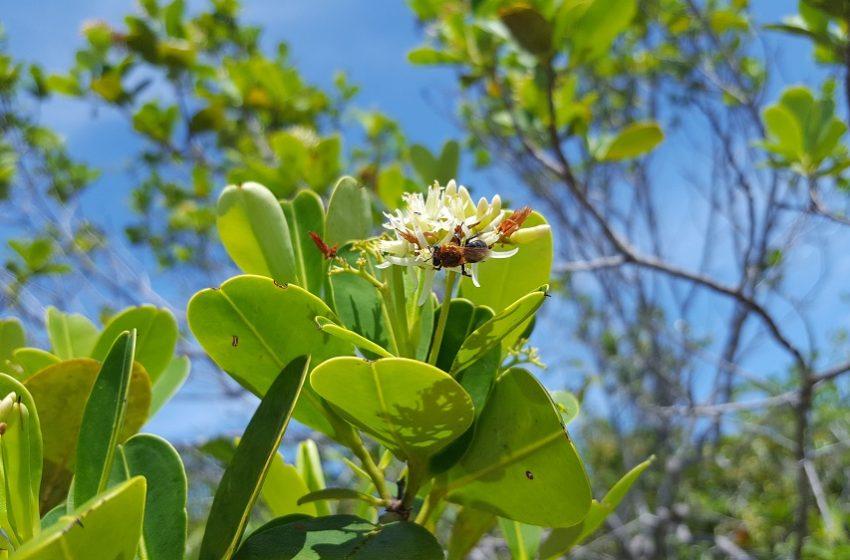 Projeto 'No Clima da Caatinga' realiza live sobre a importância das abelhas nativas da Caatinga